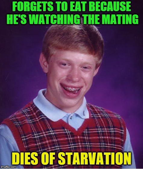 Bad Luck Brian Meme | FORGETS TO EAT BECAUSE HE'S WATCHING THE MATING DIES OF STARVATION | image tagged in memes,bad luck brian | made w/ Imgflip meme maker