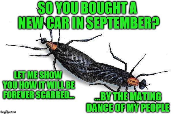Love Bug season | SO YOU BOUGHT A NEW CAR IN SEPTEMBER? ...BY THE MATING DANCE OF MY PEOPLE LET ME SHOW YOU HOW IT WILL BE FOREVER SCARRED... | image tagged in memes,love bug season,new car,so gross | made w/ Imgflip meme maker