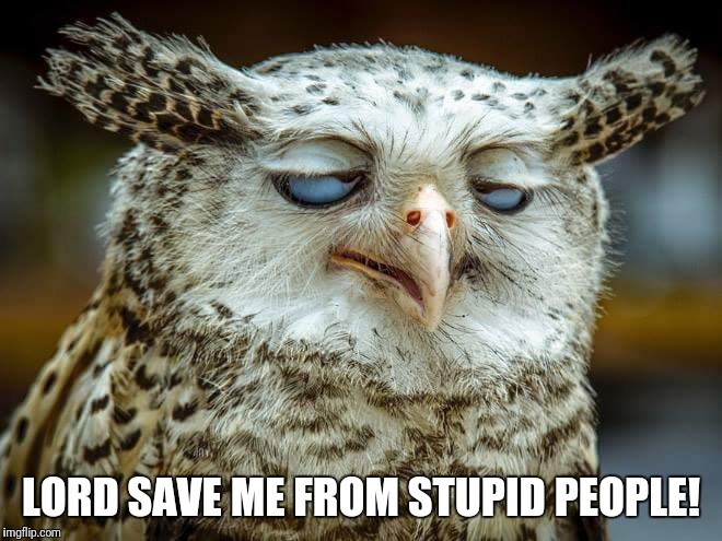 Save me!  | LORD SAVE ME FROM STUPID PEOPLE! | image tagged in funny owl,funny bird,stupid people | made w/ Imgflip meme maker