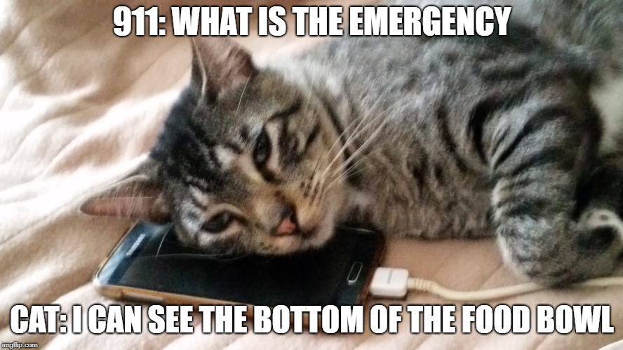 Cat emergency | 911: WHAT IS THE EMERGENCY CAT: I CAN SEE THE BOTTOM OF THE FOOD BOWL | image tagged in cats,funny cats,funny cat memes,cat memes | made w/ Imgflip meme maker