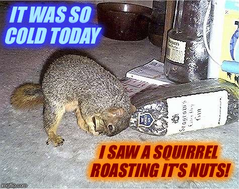 Frustrated Squirrel | IT WAS SO COLD TODAY I SAW A SQUIRREL ROASTING IT'S NUTS! | image tagged in frustrated squirrel | made w/ Imgflip meme maker