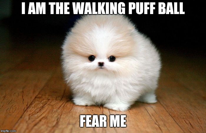 Derp Doge |  I AM THE WALKING PUFF BALL; FEAR ME | image tagged in derp doge | made w/ Imgflip meme maker
