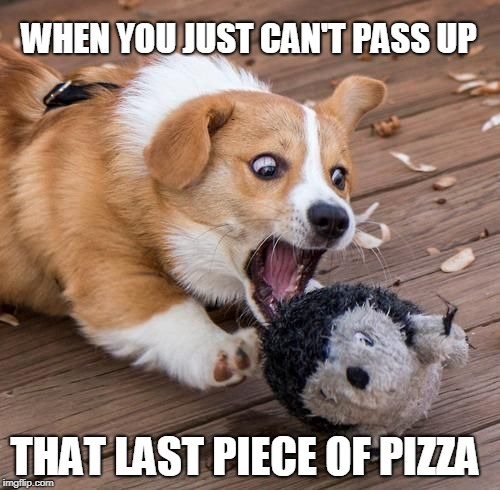 When you just can't pass up that last piece of pizza | WHEN YOU JUST CAN'T PASS UP THAT LAST PIECE OF PIZZA | image tagged in can't resist the food,doggo,corgi,cute | made w/ Imgflip meme maker