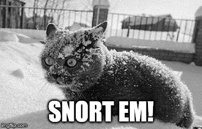 so much cocaine cat | SNORT EM! | image tagged in so much cocaine cat | made w/ Imgflip meme maker