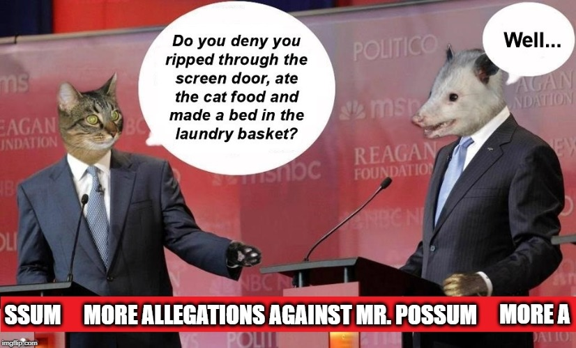 Politics in the animal world... | SSUM MORE ALLEGATIONS AGAINST MR. POSSUM MORE A | image tagged in politics,possum,impossibru,dirty laundry,fox news,cnn | made w/ Imgflip meme maker