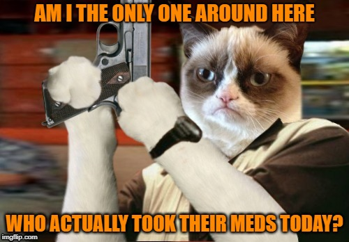 Fed-up Grumpy Cat | AM I THE ONLY ONE AROUND HERE WHO ACTUALLY TOOK THEIR MEDS TODAY? | image tagged in funny memes,grumpy cat,am i the only one around here,grumpy,shooter,stupid people | made w/ Imgflip meme maker
