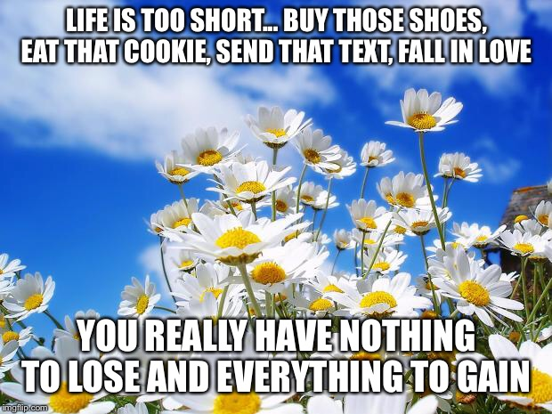 spring daisy flowers | LIFE IS TOO SHORT... BUY THOSE SHOES, EAT THAT COOKIE, SEND THAT TEXT, FALL IN LOVE YOU REALLY HAVE NOTHING TO LOSE AND EVERYTHING TO GAIN | image tagged in spring daisy flowers | made w/ Imgflip meme maker