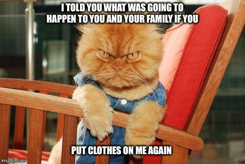 mad cat | I TOLD YOU WHAT WAS GOING TO HAPPEN TO YOU AND YOUR FAMILY IF YOU PUT CLOTHES ON ME AGAIN | image tagged in mad cat,threat,angry,pissed off | made w/ Imgflip meme maker