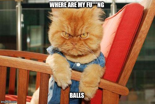 mad cat | WHERE ARE MY FU***NG BALLS | image tagged in mad cat,neuter,pissed,testicles | made w/ Imgflip meme maker