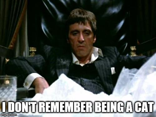 Scarface Cocaine | I DON'T REMEMBER BEING A CAT | image tagged in scarface cocaine | made w/ Imgflip meme maker