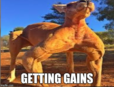 Truth  | GETTING GAINS | image tagged in funny | made w/ Imgflip meme maker