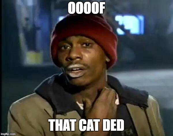 Y'all Got Any More Of That Meme | OOOOF THAT CAT DED | image tagged in memes,y'all got any more of that | made w/ Imgflip meme maker
