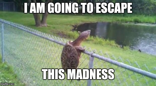 turtle fence escape | I AM GOING TO ESCAPE THIS MADNESS | image tagged in turtle fence escape | made w/ Imgflip meme maker