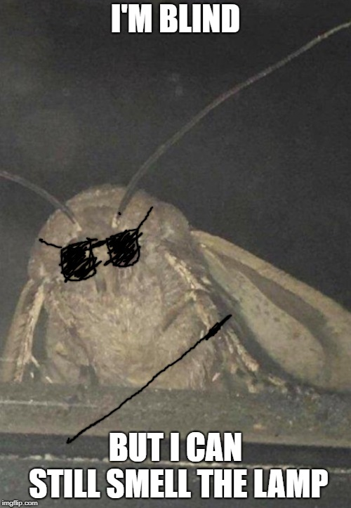 Moth | I'M BLIND BUT I CAN STILL SMELL THE LAMP | image tagged in moth | made w/ Imgflip meme maker