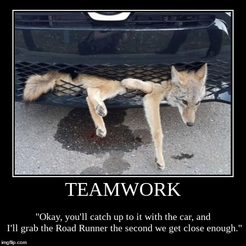 "TEAMWORK | ""Okay, you'll catch up to it with the car, and I'll grab the Road Runner the second we get close enough."" 