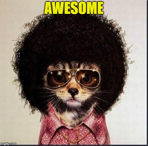 Disco Cat | AWESOME | image tagged in disco cat | made w/ Imgflip meme maker