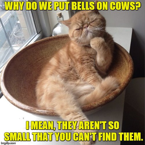 Philosocat | WHY DO WE PUT BELLS ON COWS? I MEAN, THEY AREN'T SO SMALL THAT YOU CAN'T FIND THEM. | image tagged in memes,serious cat,cats,funny cats,thinking | made w/ Imgflip meme maker