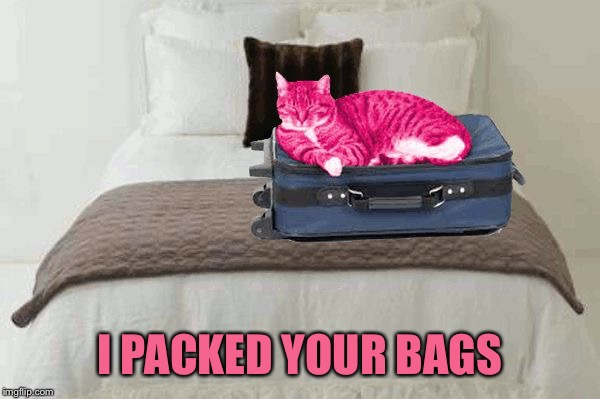 RayCat kicks to the curb | I PACKED YOUR BAGS | image tagged in raycat kicks to the curb | made w/ Imgflip meme maker