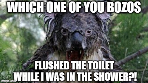 SOAPY OUTRAGE! | WHICH ONE OF YOU BOZOS FLUSHED THE TOILET WHILE I WAS IN THE SHOWER?! | image tagged in memes,angry koala,rage,angry,soap | made w/ Imgflip meme maker