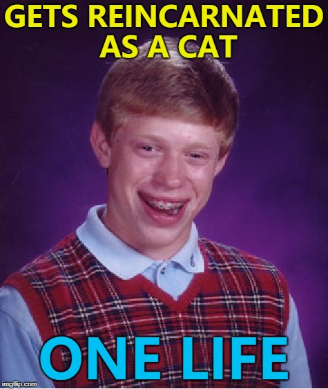 What did cats do to earn nine lives? |  GETS REINCARNATED AS A CAT; ONE LIFE | image tagged in memes,bad luck brian,cats,animals,reincarnation | made w/ Imgflip meme maker