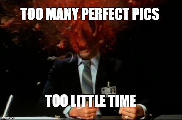 head explode | TOO MANY PERFECT PICS TOO LITTLE TIME | image tagged in head explode | made w/ Imgflip meme maker