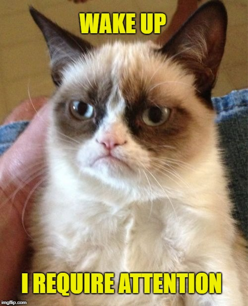 Grumpy Cat Meme | WAKE UP I REQUIRE ATTENTION | image tagged in memes,grumpy cat | made w/ Imgflip meme maker