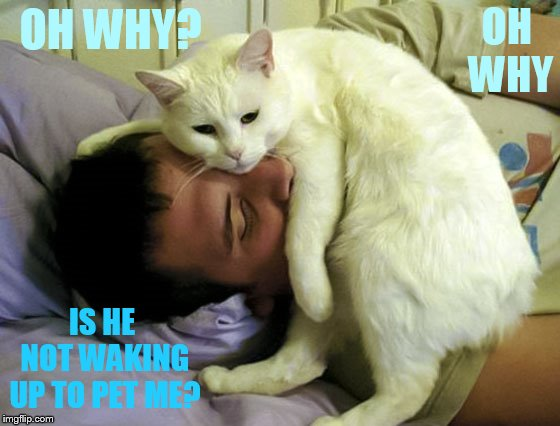 OH WHY IS HE NOT WAKING UP TO PET ME? OH WHY? | made w/ Imgflip meme maker