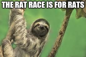 Rat Race | THE RAT RACE IS FOR RATS | image tagged in sloth,ratrace,hammockwisdom | made w/ Imgflip meme maker
