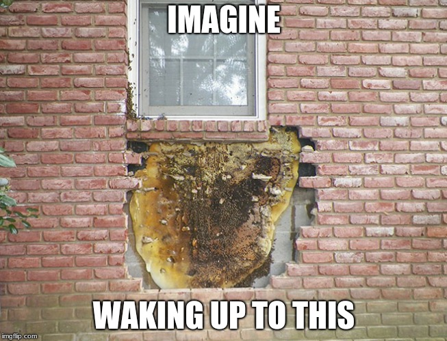 When you log onto imgflip after being sick all weekend | IMAGINE WAKING UP TO THIS | image tagged in bad construction week,memes about memeing | made w/ Imgflip meme maker