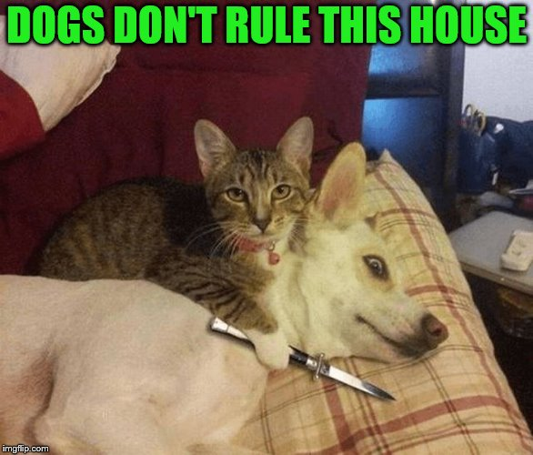 Cat with knife at dog's throat | DOGS DON'T RULE THIS HOUSE | image tagged in cat with knife at dog's throat | made w/ Imgflip meme maker