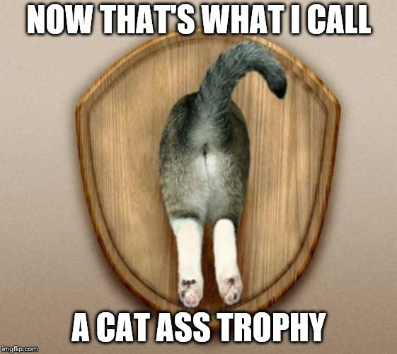 Cat-Ass-Trophy | NOW THAT'S WHAT I CALL A CAT ASS TROPHY | image tagged in cat-ass-trophy | made w/ Imgflip meme maker