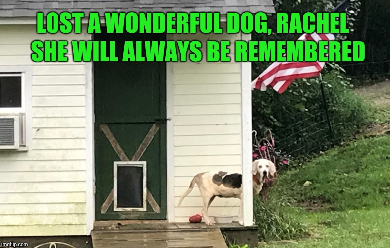 Rachel was a Grand Night Champion coonhound, had to put her down at the age of 15 | LOST A WONDERFUL DOG, RACHEL SHE WILL ALWAYS BE REMEMBERED | image tagged in dog,rip,coonhound,pipe_picasso | made w/ Imgflip meme maker