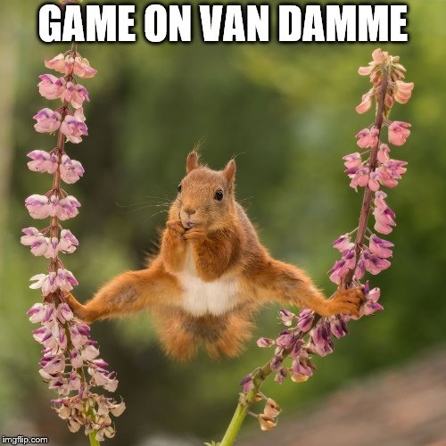 Game on! | GAME ON VAN DAMME | image tagged in van damme | made w/ Imgflip meme maker