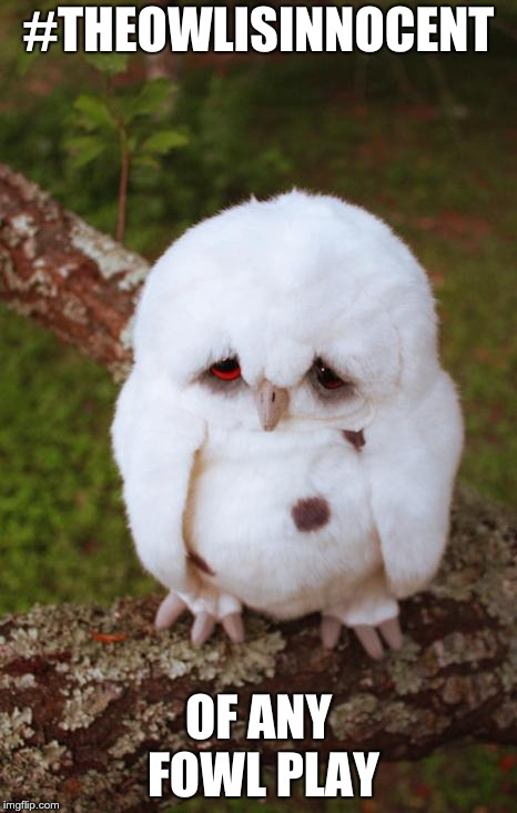 sad owl | #THEOWLISINNOCENT OF ANY FOWL PLAY | image tagged in sad owl | made w/ Imgflip meme maker