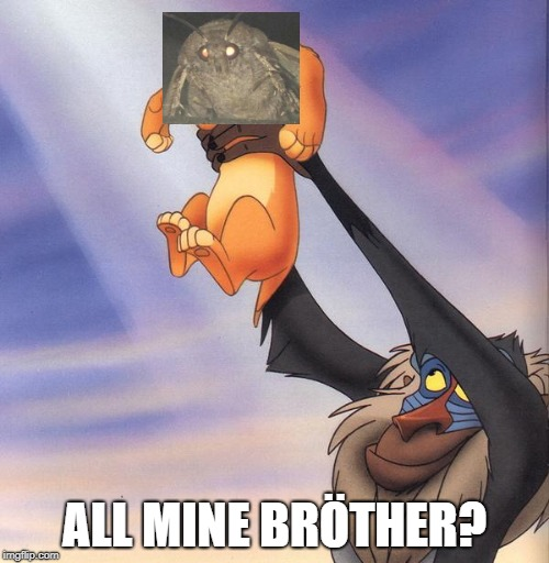 All Mine Bröther? |  ALL MINE BRÖTHER? | image tagged in moth meme,moth,light,brther,simba,lion king | made w/ Imgflip meme maker