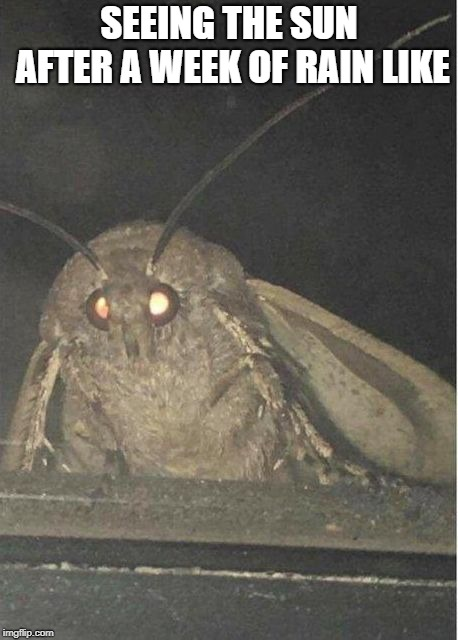 Moth meme |  SEEING THE SUN AFTER A WEEK OF RAIN LIKE | image tagged in moth meme | made w/ Imgflip meme maker