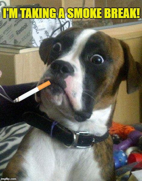 Surprised Dog | I'M TAKING A SMOKE BREAK! | image tagged in surprised dog | made w/ Imgflip meme maker