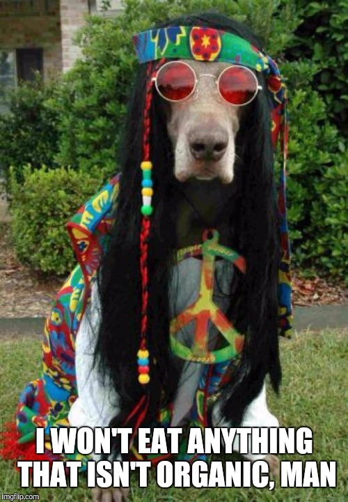 Hippie dog  | I WON'T EAT ANYTHING THAT ISN'T ORGANIC, MAN | image tagged in hippie dog | made w/ Imgflip meme maker