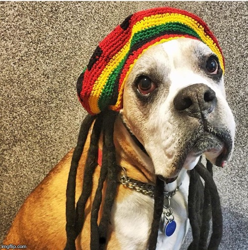 Rasta dog  | . | image tagged in rasta dog | made w/ Imgflip meme maker