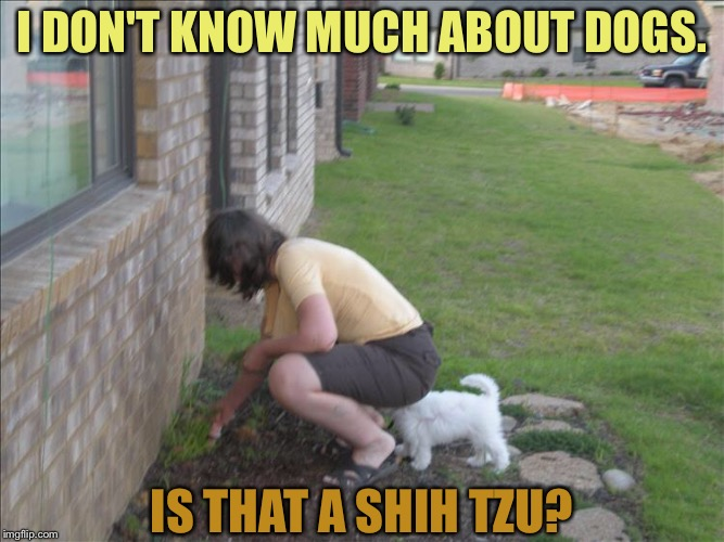 Little helper. | I DON'T KNOW MUCH ABOUT DOGS. IS THAT A SHIH TZU? | image tagged in dog,hiding,memes,funny | made w/ Imgflip meme maker