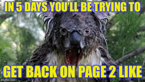 Angry Koala Meme | IN 5 DAYS YOU'LL BE TRYING TO GET BACK ON PAGE 2 LIKE | image tagged in memes,angry koala | made w/ Imgflip meme maker