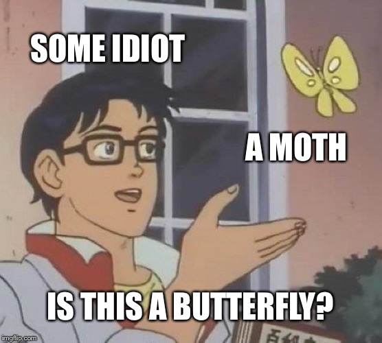 That is not a white butterfly. That is a moth. | SOME IDIOT A MOTH IS THIS A BUTTERFLY? | image tagged in memes,is this a pigeon,moths | made w/ Imgflip meme maker