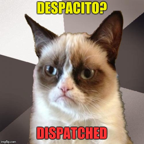 Musically Malicious Grumpy Cat |  DESPACITO? DISPATCHED | image tagged in musically malicious grumpy cat,grumpy cat,grumpy cat weekend,socrates,craziness_all_the_way,olympianproduct | made w/ Imgflip meme maker
