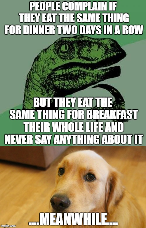 The struggle is real | PEOPLE COMPLAIN IF THEY EAT THE SAME THING FOR DINNER TWO DAYS IN A ROW BUT THEY EAT THE SAME THING FOR BREAKFAST THEIR WHOLE LIFE AND NEVER | image tagged in dogs,philosoraptor,memes,funny | made w/ Imgflip meme maker