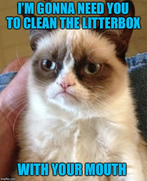 Grumpy Cat Weekend by Craziness_all_the_way and socrates! | I'M GONNA NEED YOU TO CLEAN THE LITTERBOX WITH YOUR MOUTH | image tagged in memes,grumpy cat | made w/ Imgflip meme maker