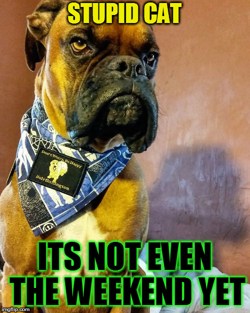 Grumpy Dog | STUPID CAT ITS NOT EVEN THE WEEKEND YET | image tagged in grumpy dog | made w/ Imgflip meme maker