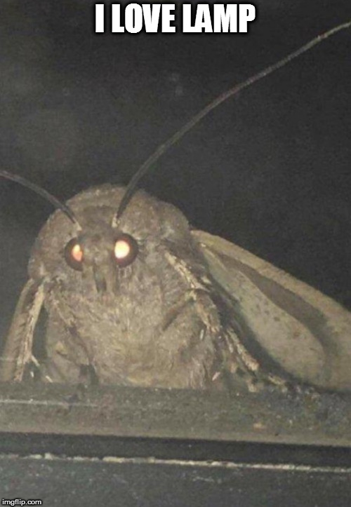 Moth | I LOVE LAMP | image tagged in moth | made w/ Imgflip meme maker