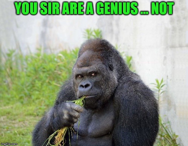 sexy monkey,memes,gorilla | YOU SIR ARE A GENIUS ... NOT | image tagged in sexy monkey,memes,gorilla | made w/ Imgflip meme maker