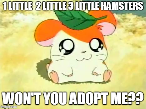 Hamtaro | 1 LITTLE  2 LITTLE 3 LITTLE HAMSTERS WON'T YOU ADOPT ME?? | image tagged in memes,hamtaro | made w/ Imgflip meme maker