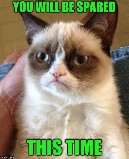 Grumpy Cat Meme | YOU WILL BE SPARED THIS TIME | image tagged in memes,grumpy cat | made w/ Imgflip meme maker